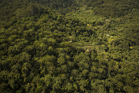 Sao Paulo, SP, BRASIL, 24-05-2017:  Especial Desmatamento do Estado de Sao Paulo. Area  mata atlantica na serra da Cantareira na zona norte de Sao Paulo . Entre suas diversidades de especies se pode observar diversas araucarias (Foto: Eduardo Knapp/Folhapress, COTIDIANO).