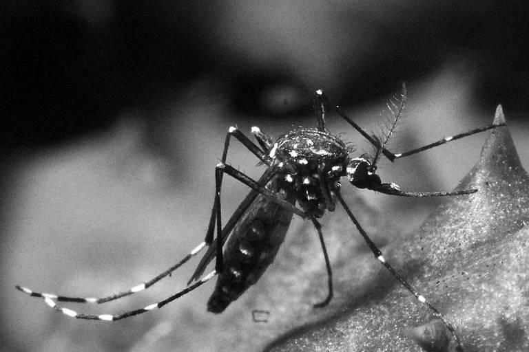 O alarme da dengue