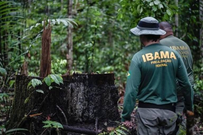 Agente do Ibama em frente a resto de árvore derrubada