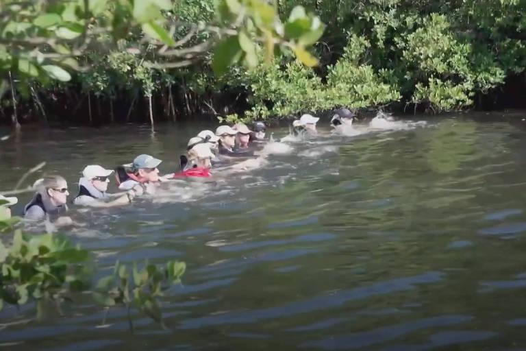 Corrente humana para salvar golfinhos