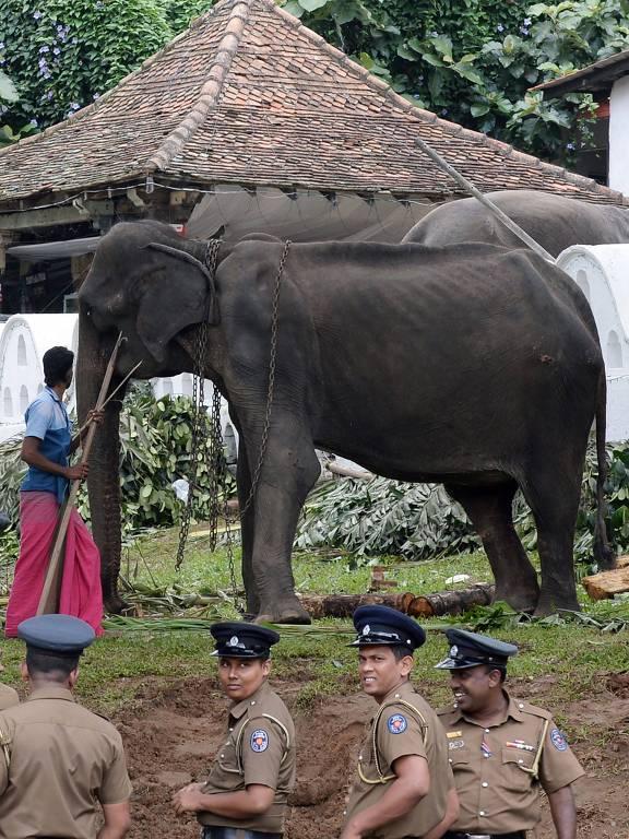 Elefante esquelético no Sri Lanka