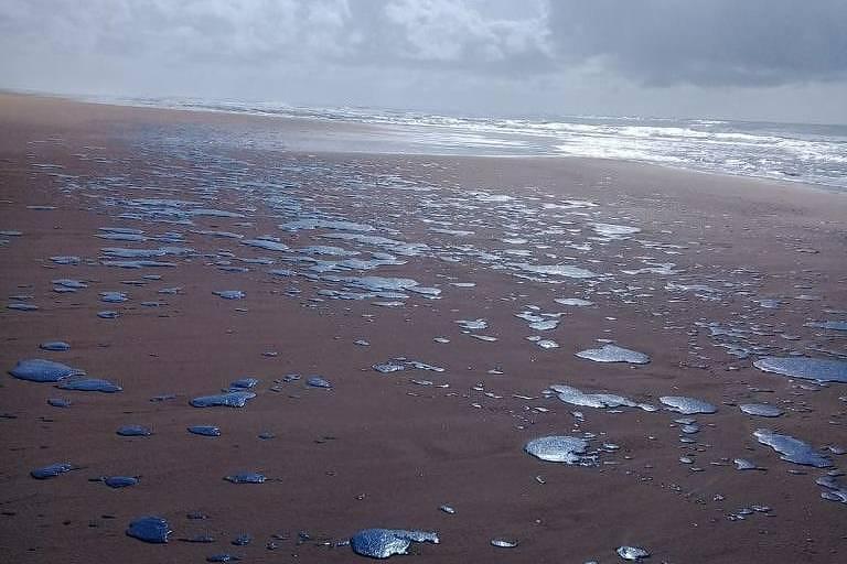 Mancha de óleo que atingiu no início do mês 39 praias no litoral nordestino chegou a Sergipe na manhã desta quarta-feira (25).  A praia de Ponta dos Mangues, no município de Pacatuba, amanheceu com piche na areia