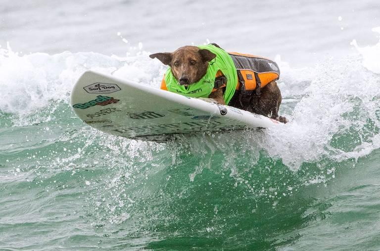 Mundial de surfe canino
