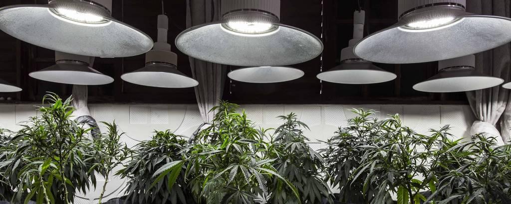 Plantão de Cannabis de associação de pacientes na Paraíba
