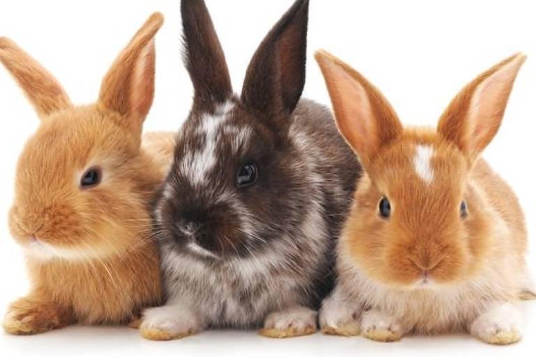 Nos coelhos e em outras espécies, é a atividade sexual que desencadeia a ovulação