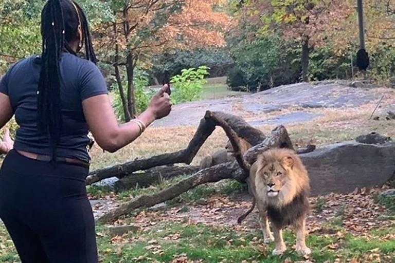 Mulher invade área dos leões em zoológico do Bronx