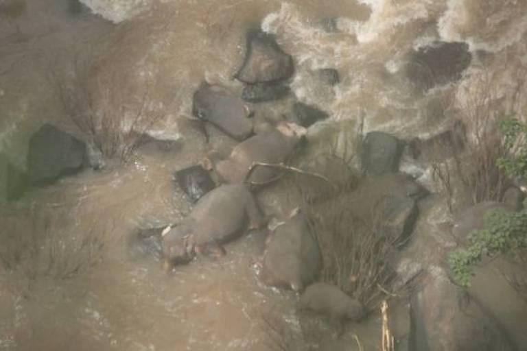 Para autoridades da Tailândia, tragédia aconteceu quando grupo tentou salvar bebê elefante