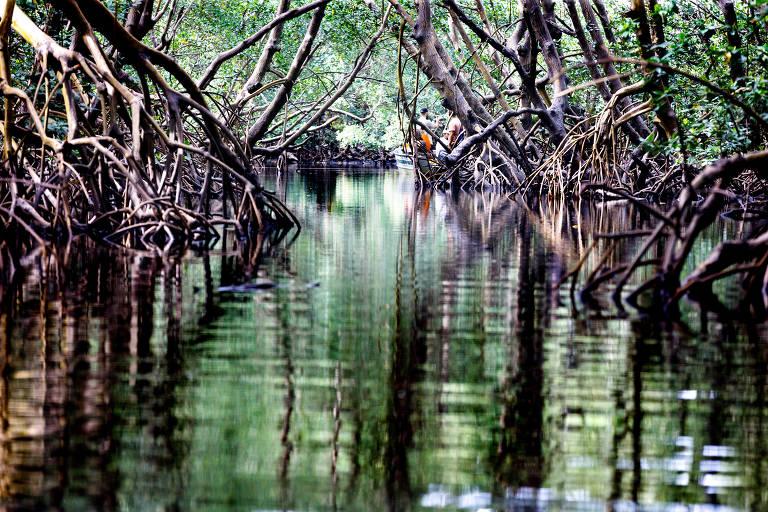 Área de manguezal em Canavieiras, sul da Bahia