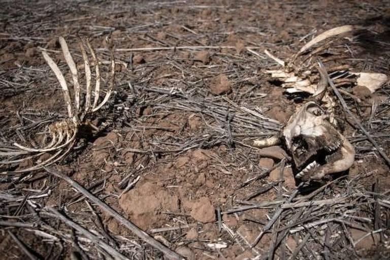 Ossada de animal em chão seco, cheio de galhos e folhas mortas