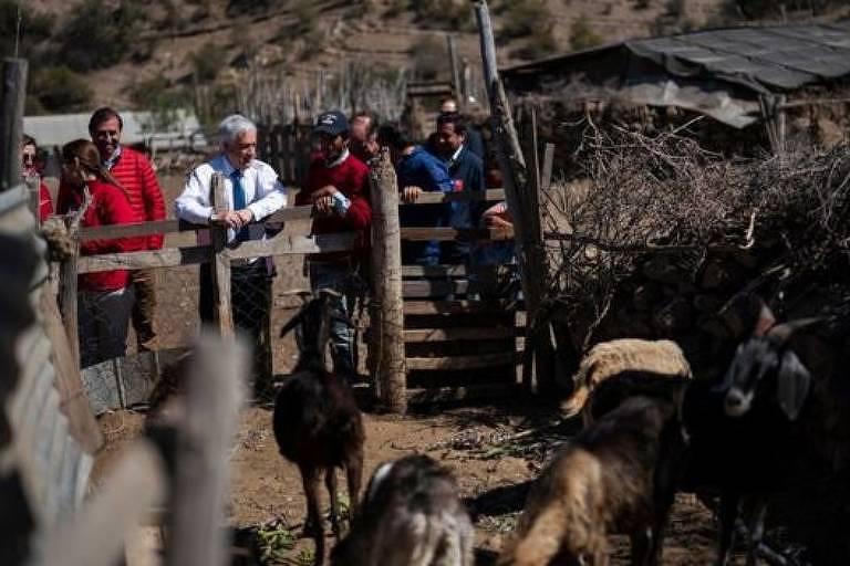 O presidente chileno se apoia em um cercado de madeira ao lado de fazendeiros. Ele observa os animais magros.