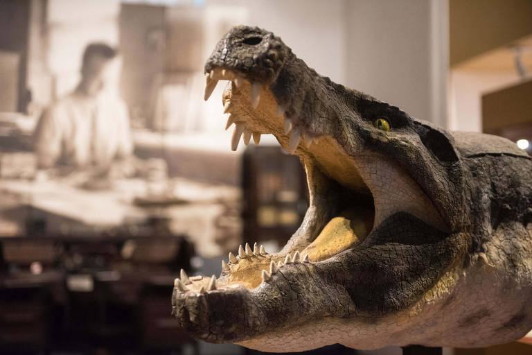 Museu de Ciências da Terra - Reconstituição da cabeça do Crocodiliano Stratiotosuchus, encontrado no Cretáceo (80 milhões de anos) no estado de São Paulo