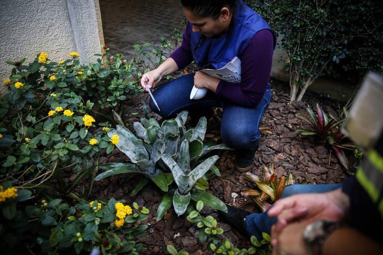 Agentes de zoonoses da Prefeitura de São Paulo buscam larvas do mosquito Aedes aegypti em Higienópolis