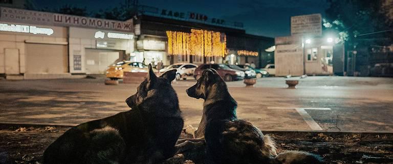 Cena do documentário 'Cães do Espaço'