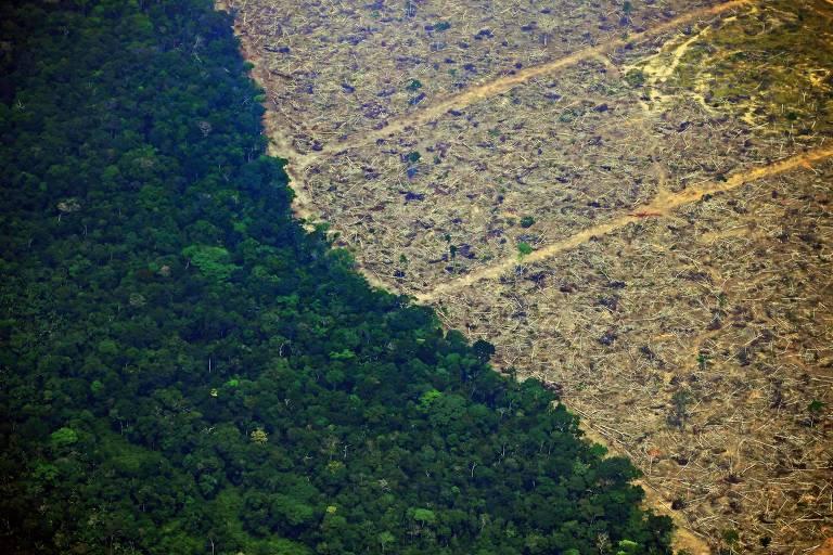 Área de floresta ao lado de área desmatada