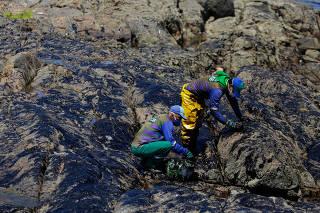 Agentes realizam limpeza de óleo acumulado na praia de Pedra do Sal (BA)