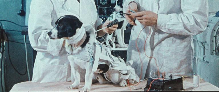 Veja cenas de 'Cães do Espaço'