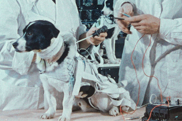 """Cena de """"Cães do Espaço"""""""