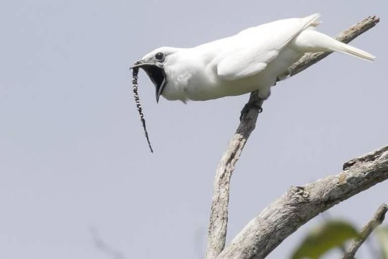 foto do pássaro branco