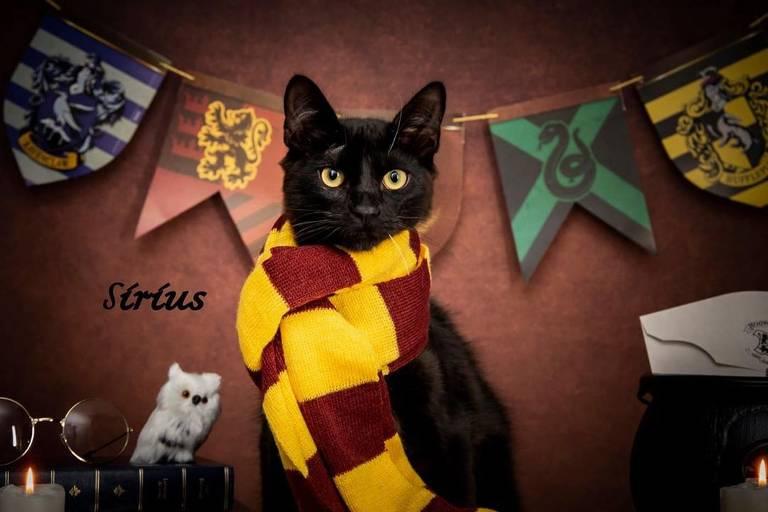 Gatos para adoção fazem ensaio inspirado em 'Harry Potter'