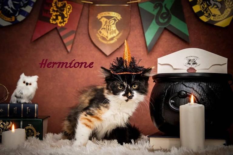 Fotógrafa faz ensaio inspirado em 'Harry Potter' para estimular adoção de gatos