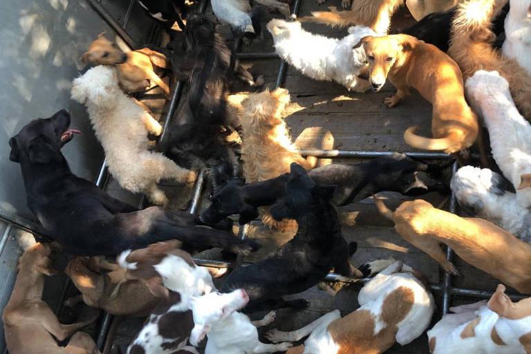 Polícia fecha fábrica clandestina que fazia linguiça com carne de cães e gatos