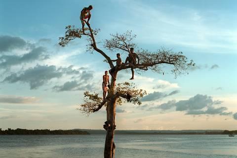 Grupo sobe em árvore no rio Xingu, em Altamira, no Pará
