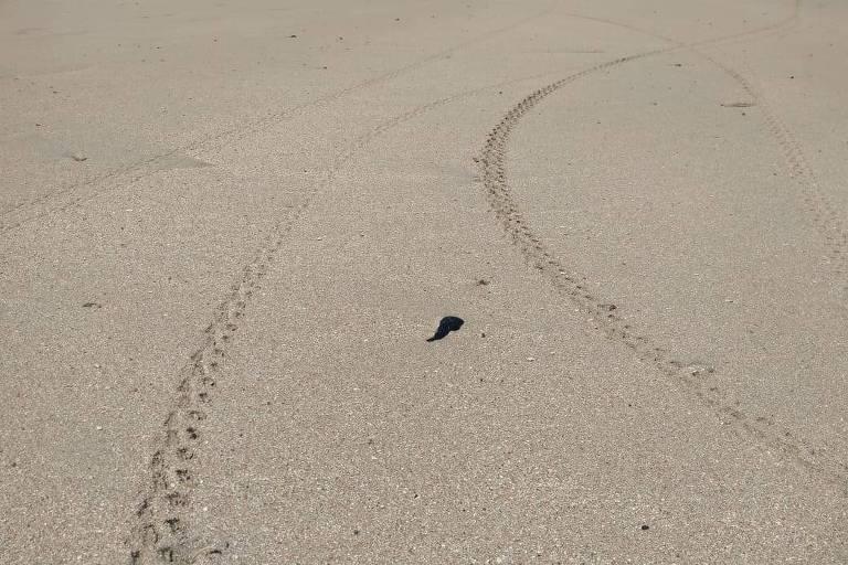 Mancha de óleo na praia de Porto da Rua, em São Miguel dos Milagres, no dia 16 de outubro