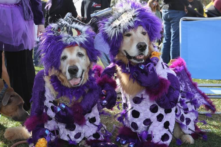 De evento em Bangalore a Halloween em Nova York, veja imagens com cães