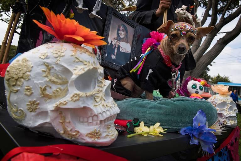 Cães arrasam em eventos de Halloween; veja fantasias