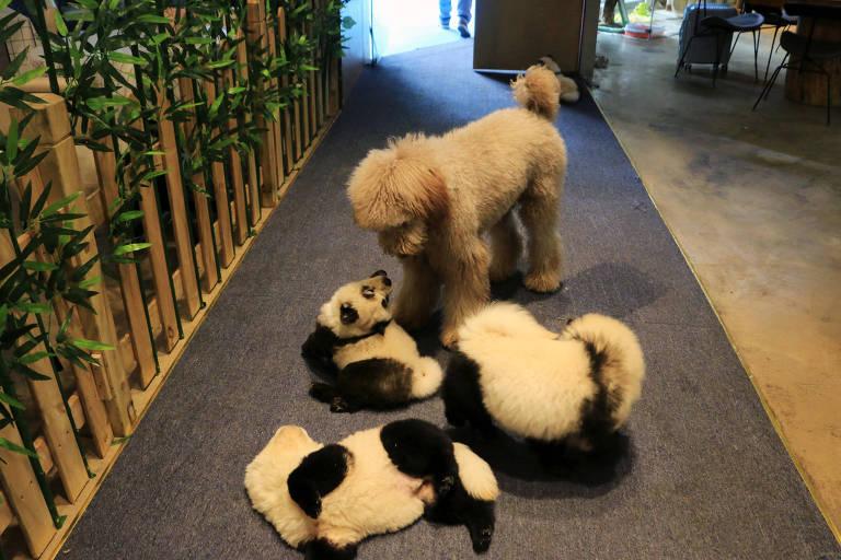 Cachorro ou panda?