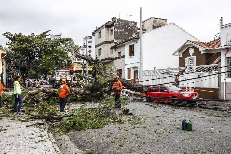 Remoção de árvore que tombou na Lapa, zona oeste de São Paulo