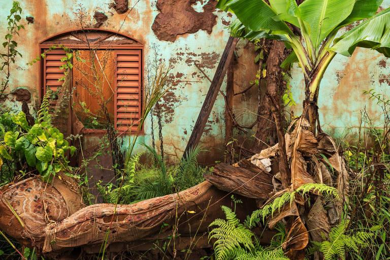 casa destruída com vegetação