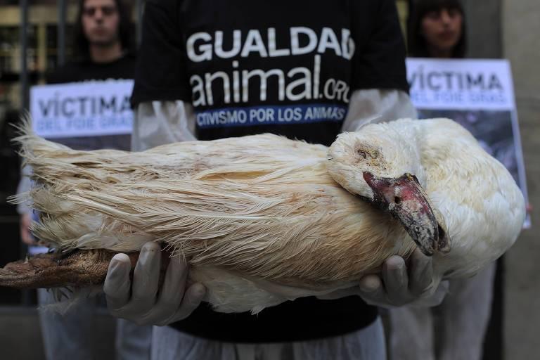 """Um ativista do grupo de direitos dos animais """"Igualdad Animal"""" segura um pato morto para denunciar o abuso de animais durante a elaboração do foie gras em 12 de julho de 2012 em Barcelona"""