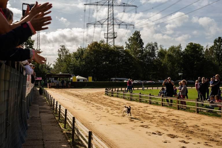 Cachorro corre numa pista de terra e é aplaudido por pessoas que acompanham nas laterais