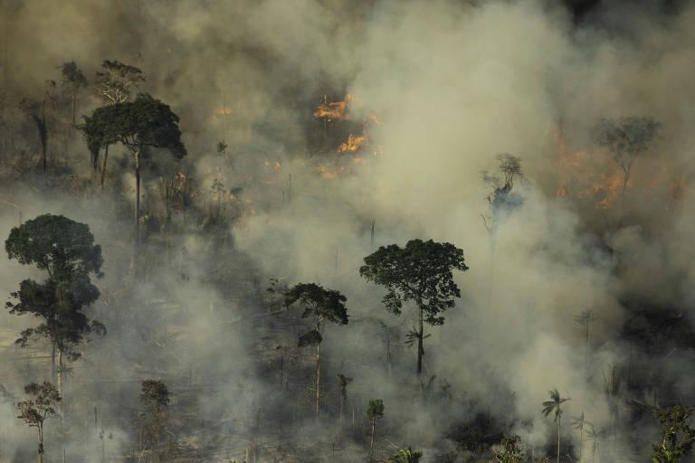 floresta tomada por fogo e fumaça