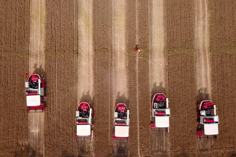 Plantações de trigo na China, no distrito de Jiaxiang