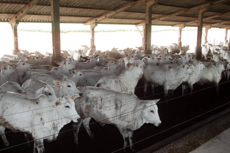 Criação de gado de corte no Paraná; arroba do boi se aproxima de máxima histórica de 2015