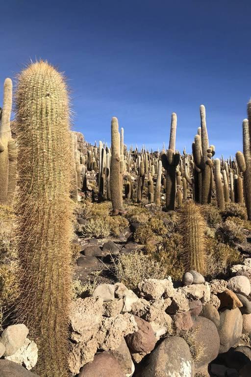 Cactos de todos os tipos e tamanhos em meio a pedras e vegetação rasteira.