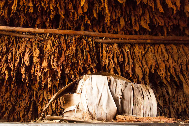 Cabana de palha em Vale de Viñales usada para secar folhas de tabaco