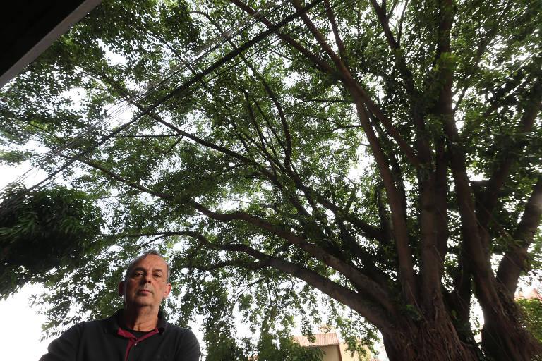 Reclamações de poda de árvore