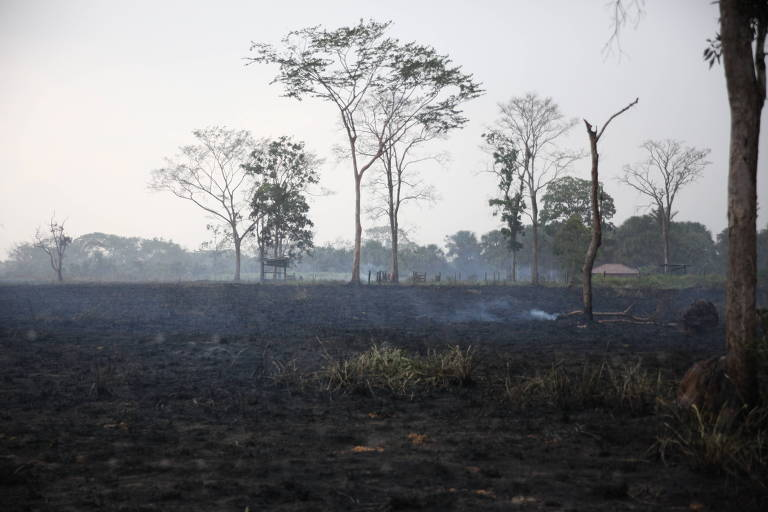Estragos causados por incêndios florestais em mata nas cercanias de Rio Branco (AC), em abril de 2019