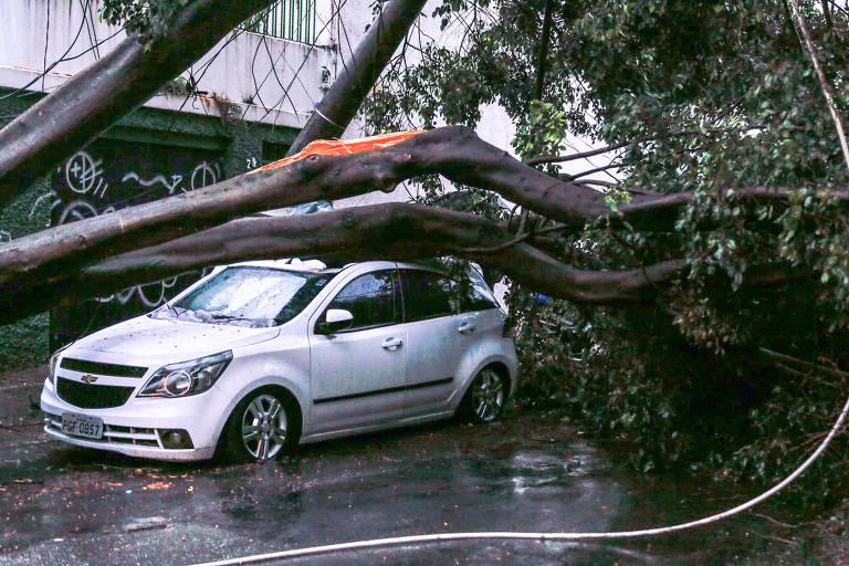 Chuva em SP. Árvore caiu sobre carro e derrubou poste na rua Inácio de Araújo, região do Brás, região central de São Paulo