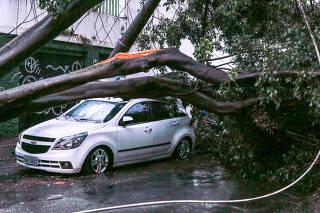 Árvore cai sobre veículo após chuva em São Paulo