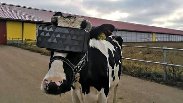 O visor foi adpatado especialmente para a cabeça dos animais