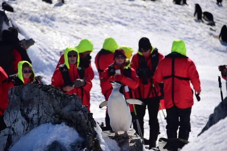 Turistas fotografam pinguim nas Ilhas Shetland do Sul, na Antártida