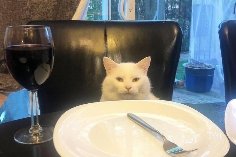 Smudge, protagonista do meme da mulher gritando com o gato