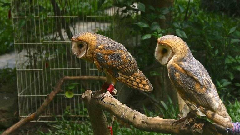 Os brasileiros que criam aves de rapina como águias, falcões e corujas