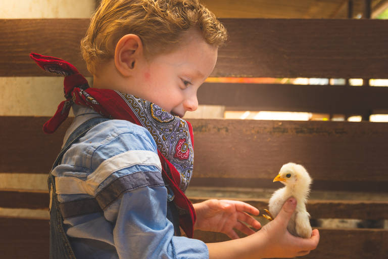 Criança pequena segura filhote de galinha