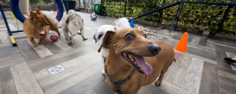 SAO PAULO, SP, BRASIL. 04.12.2019. Creches para cachorros em um hospital veterinário na Sena Madureira na Vila Mariana.  (foto: Rubens Cavallari/Folhapress,SHOW)