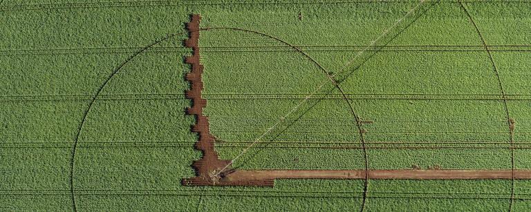 Agrofolha